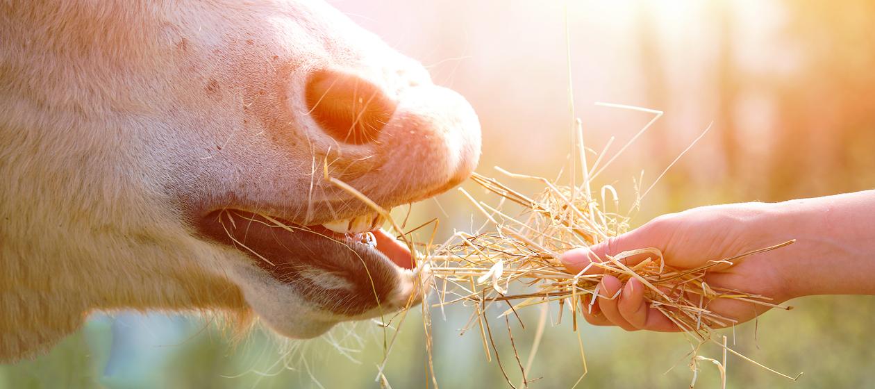 Körner und Saaten