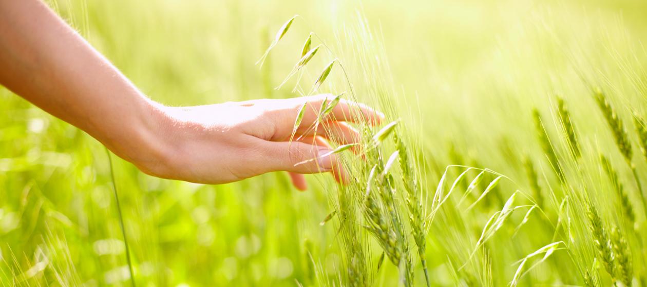 Bio zertifizierte Lebensmittel