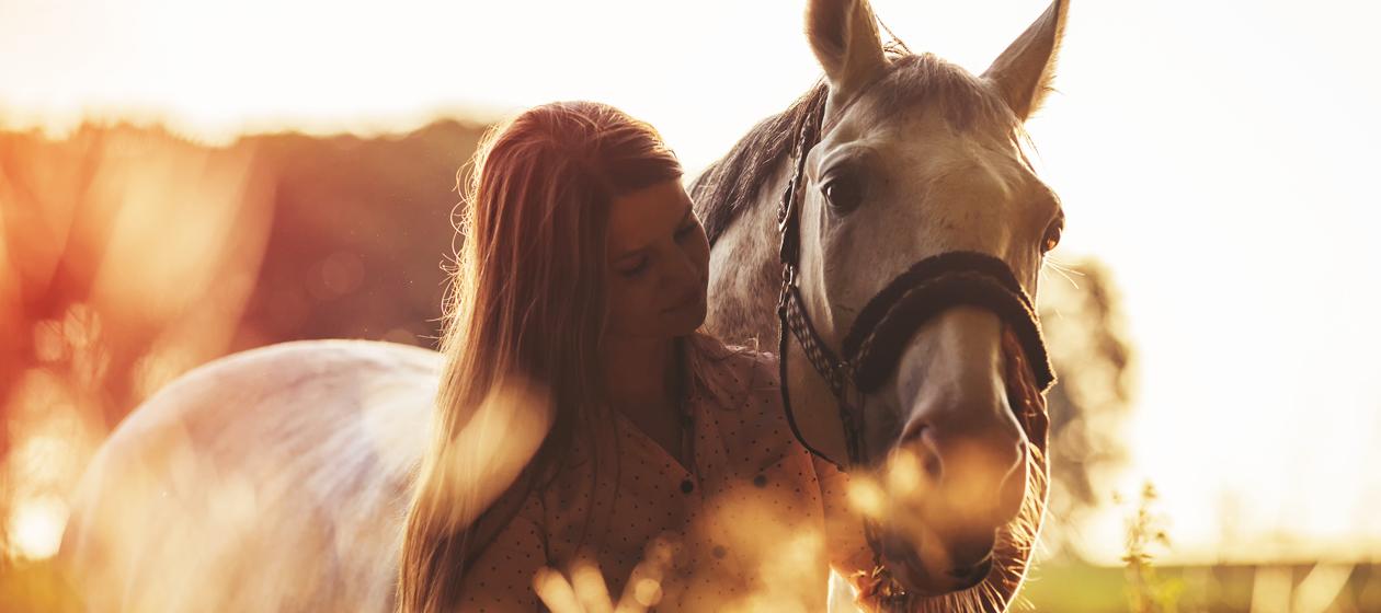 Ergänzungsfutter für Pferde